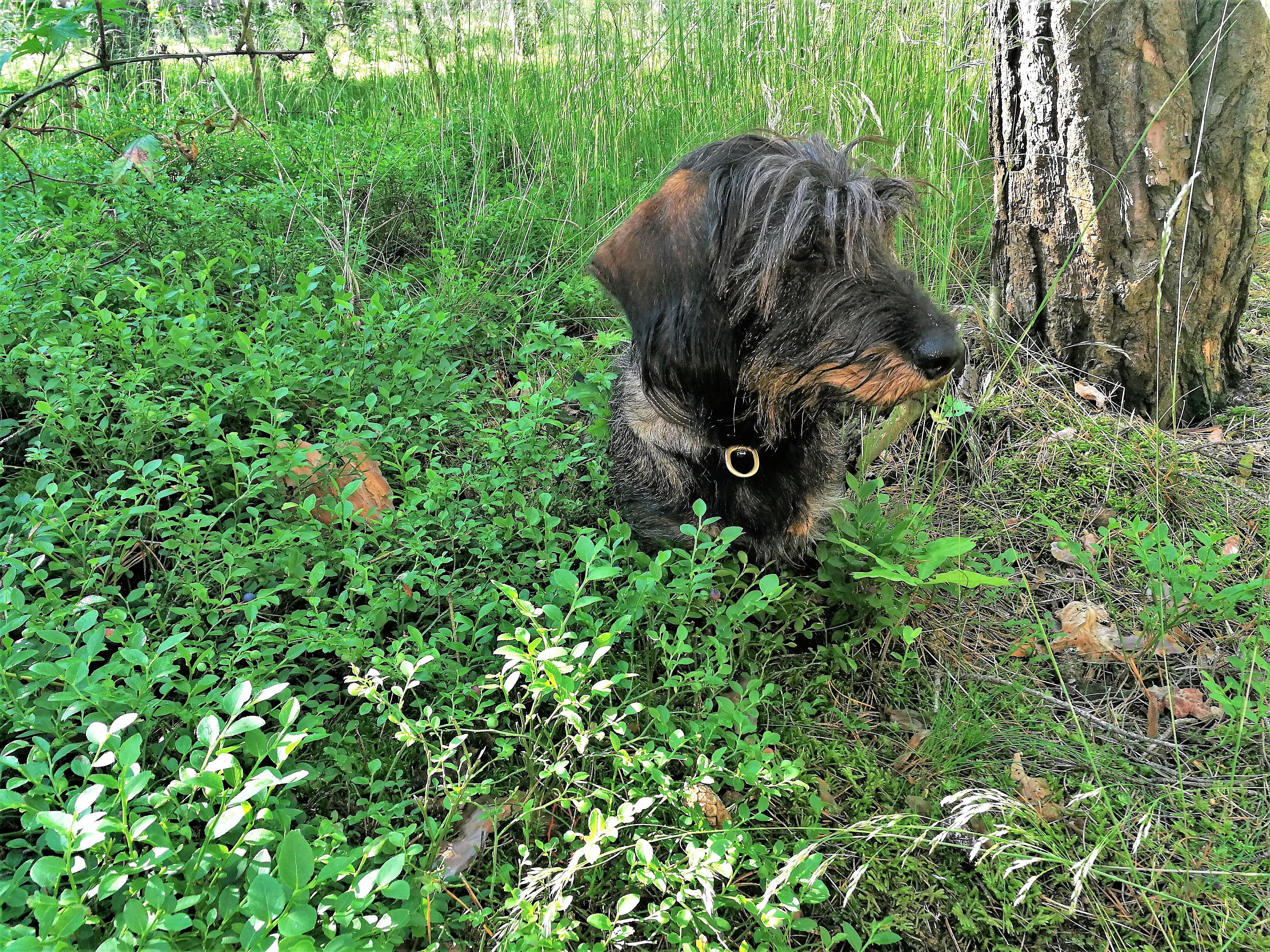 Sammy genießt das nach dem langen Regen frische Grün